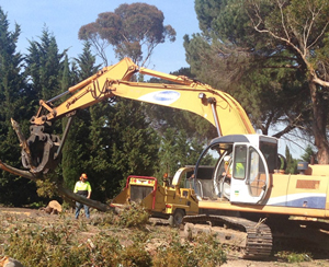 mulching large logs, Tayler's Tree Lopping mornington peninsula